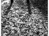 1987-laub-auf-strassenpflaster